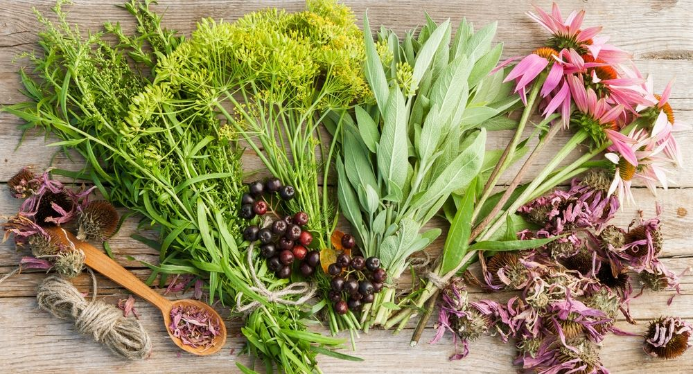 bunches of healing herbs and coneflowers on wooden plank,top vie