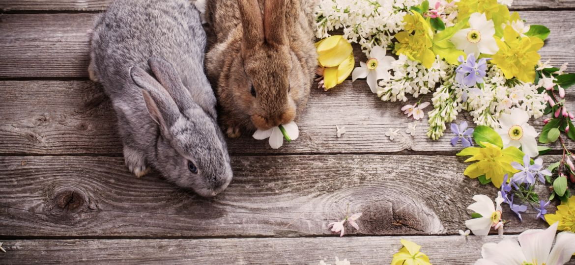 bunny with spring flowers on old wooden background