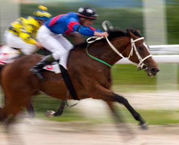 Horse race for the prize Pyatigorsk, Northern Caucasus.
